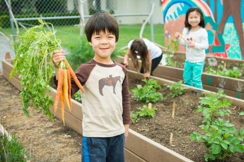 Last year's Kindergarten class explores the Cowper Campus Garden.